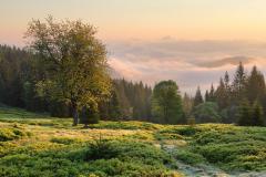 Ze Zelené hory